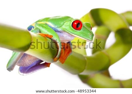 Green frog on bamboo tree