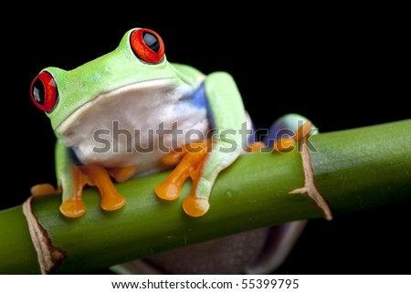 Green frog on black - stock photo