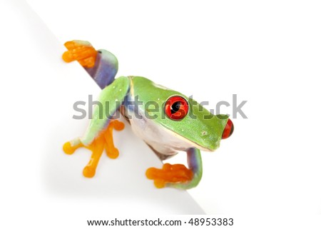 Green frog on board - stock photo