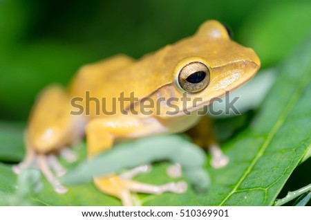 green frog on green leaf with green blurred background in spring season