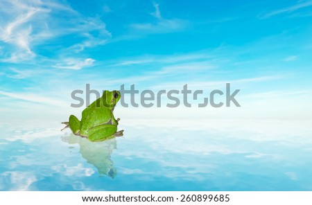 green frog on the water under a blue sky - stock photo