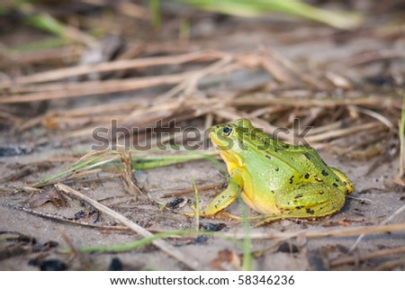 green frog seat between trees and leaves - stock photo