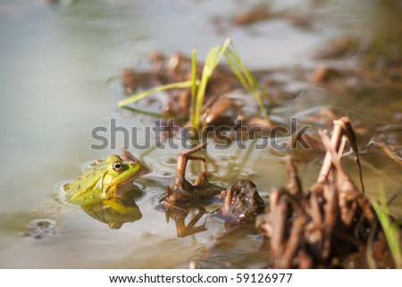 green frog seat in water near beach - stock photo