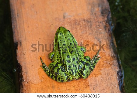 green frog seat on yellow board - stock photo