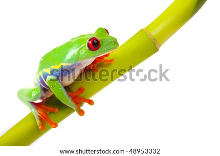 green frog sitting on bamboo - stock photo