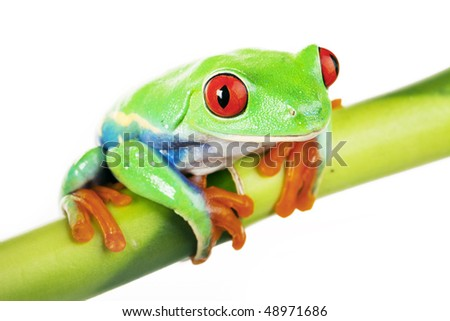 Green Frog sitting on bamboo tree - stock photo