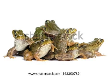 Green frogs (Rana clamitans) - stock photo