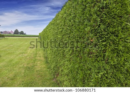 green garden  hedge with lawn and deep blue sky. - stock photo