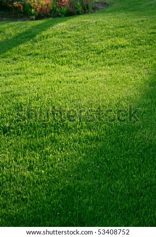 Green garden lawn grass mat with shadows, shallow DOF