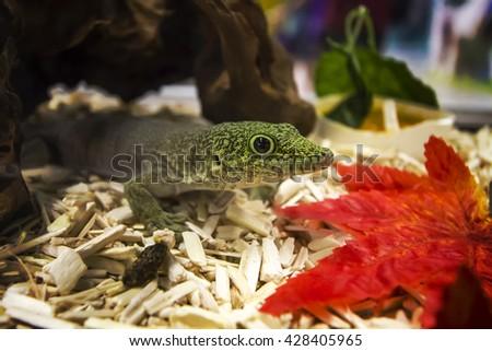 Green gecko - stock photo