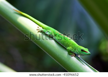 Green gecko on the leaf (Zurich zoo) - stock photo
