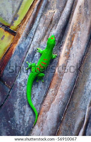 Green gecko on the palm tree (Zurich zoo) - stock photo