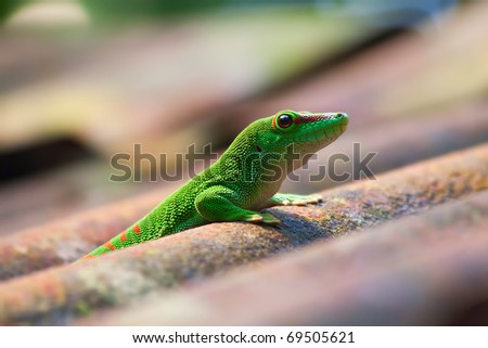 Green gecko on the roof (Zurich zoo) - stock photo