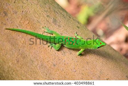 Green gecko on the tree - stock photo