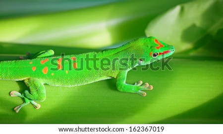 Green gecko on the tree (Zurich zoo) - stock photo