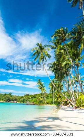 Green Getaway Palm Panorama  - stock photo
