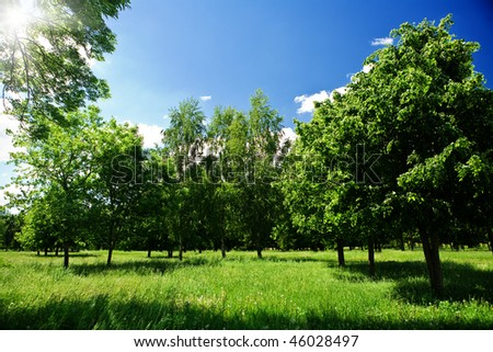 Green glade in forest