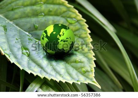 green globe on wet leaf background - stock photo