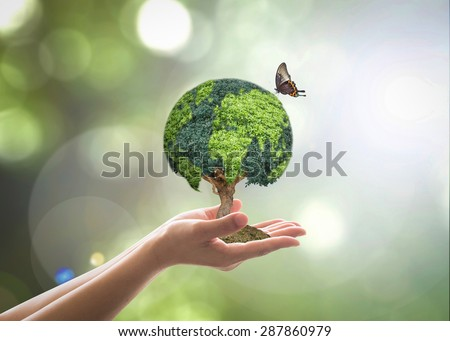 Green globe shape tree planting on female human hands with butterfly in blurred natural bokeh background : Environment conservation campaign concept : Reforestation, sustainable forest and plantation - stock photo