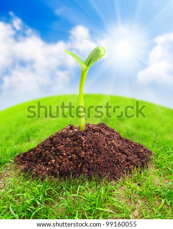 Green globe with young seedling growing in a soil. Environmental protection concept. - stock photo