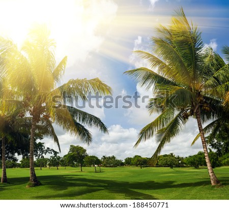 green golf course and blue sky. palm trees in sunlight. Sunset landscape in Dominican Republic. Nature of caribbean island - stock photo