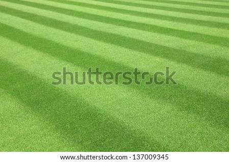 Green  golf  Fairway textured pattern