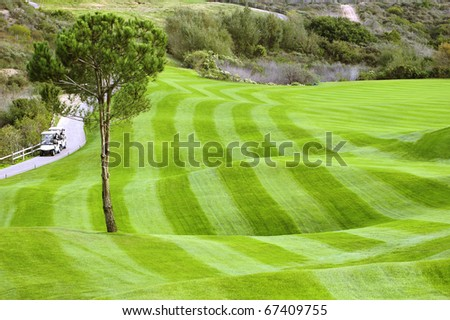 Green golf field and carts - stock photo