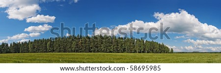 Green grain field under a wind with distance wood  under the blue sky with white clouds - stock photo