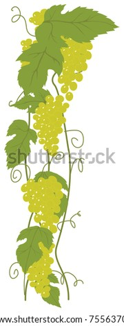 Green grapes. - stock photo