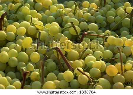 Green grapes at a market (early morning light) - stock photo