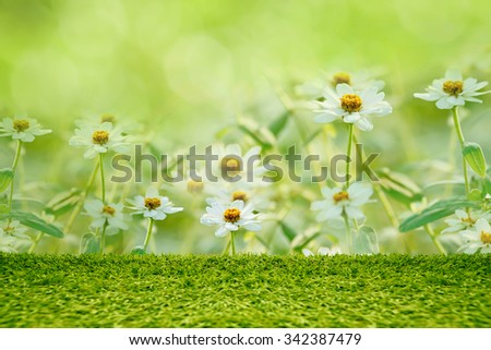 Green grass abstract natural background. - stock photo