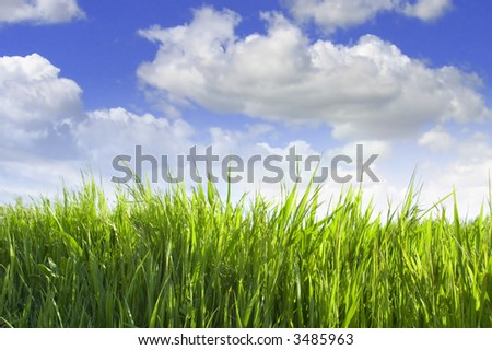 Green grass against blue cloudy sky background
