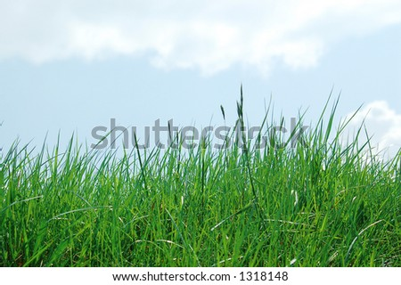 Green grass against blue sky with clouds - stock photo