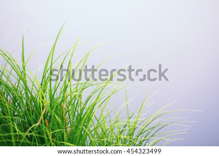 Green grass against blue water - stock photo