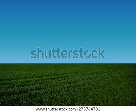green grass against the blue sky - stock photo