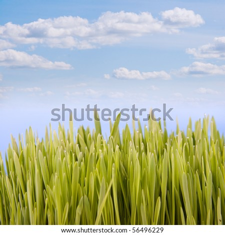 Green grass against the sky