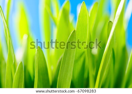 Green grass against the sky background - stock photo