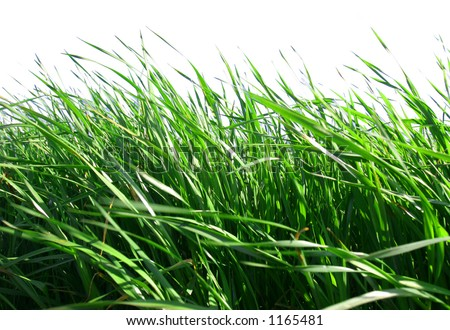 Green Grass Against White