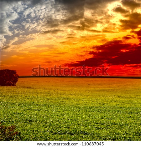 Green grass, and beautiful cloud on the sun set - stock photo