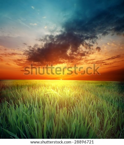 green grass and beautiful sunset