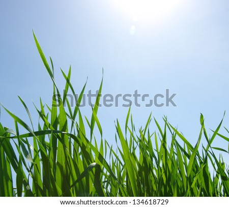 green grass and blue clear sky with sunlight - stock photo