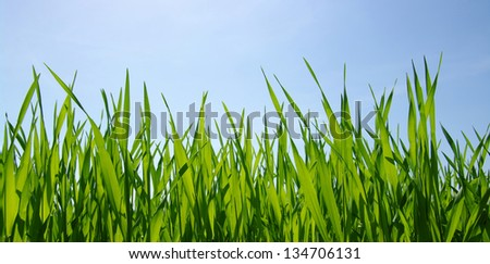 green grass and blue clear sky with sunlight