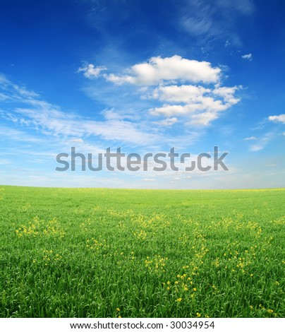 green grass and blue cloudy sky - after a rain