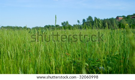 Green grass and blue sky. A summer landscape, background