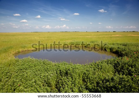 Green Grass and Blue Sky with Water