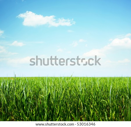 Green grass and clear blue sky with rare clouds