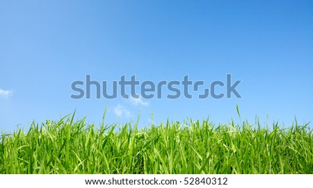 Green grass and clear sky - stock photo
