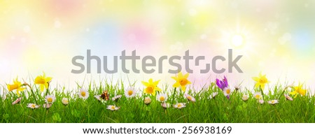 Green grass and colorful spring flowers. - stock photo