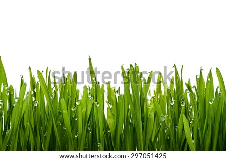 green grass and dew - stock photo
