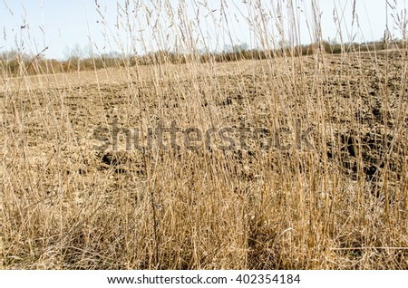 dry grass field background. Green Grass And Dry / Dying Hay Background Withered Yellow Field D